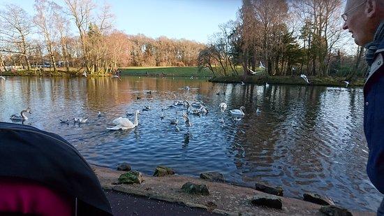 Giffnock, UK: DSC_5227_large.jpg