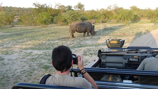 Simbambili Game Lodge: On a game drive with Daug