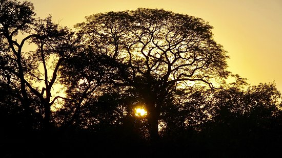 Machampane Wilderness Camp: Sunset from the tent house