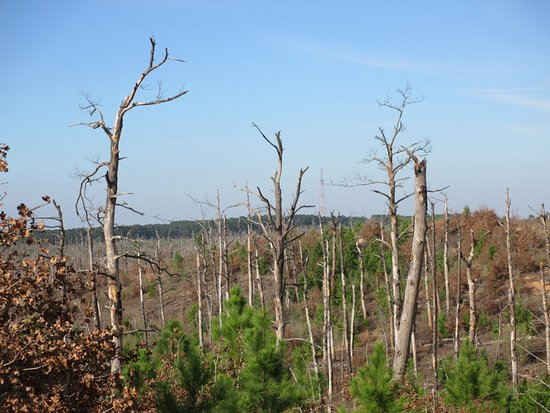 Bastrop, TX: The devastation of the 2011 fire is evident at Lookout Point and almost everywhere else.