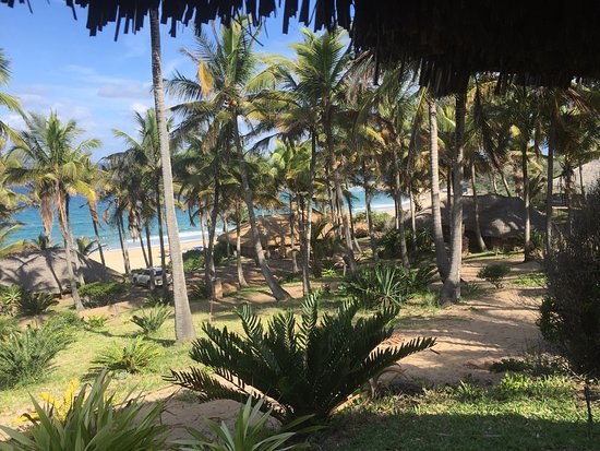 Jeff's Palm Resort: Perfect in every way!!!!