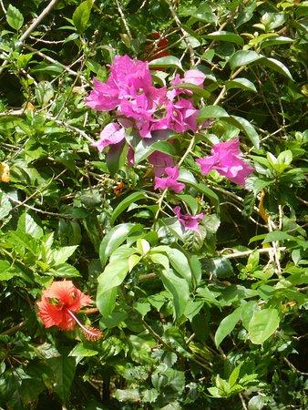 Poindimie, Nueva Caledonia: fleurs a l'entrée