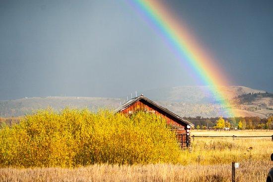 Wilson, WY: Rainbow (Teton Raptor Center)