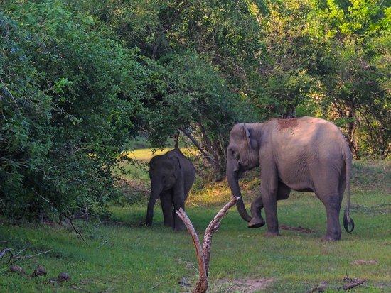 Nimsara Yala Safari