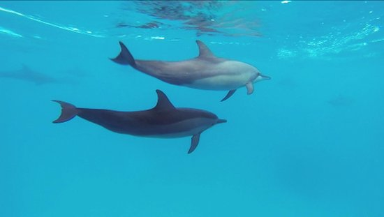 Ameera Maldives: GoPro photo whilst on Dolphin tour