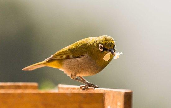 The Tops Guesthouse: Zahlreiche Vögel besuchen das TOP-Hotel in Wilderness