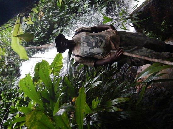 Tobago Forest Reserve: DSCN1736_large.jpg