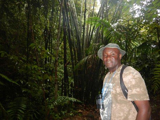 Tobago Forest Reserve: DSCN1698_large.jpg