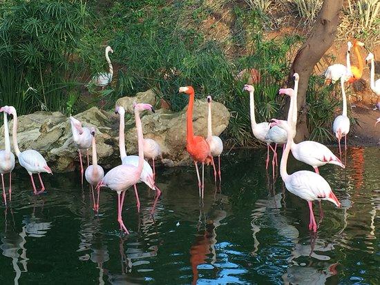 Picture of jardin zoologique national de for Jardin zoologique