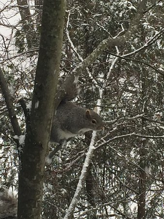 The Chadwick Bed & Breakfast: Squirrels were scampering during a snowstorm