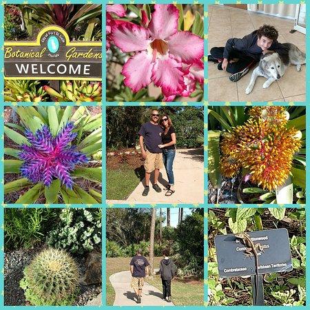Port St Lucie Botanical Gardens: PhotoGrid_1483188210789_large