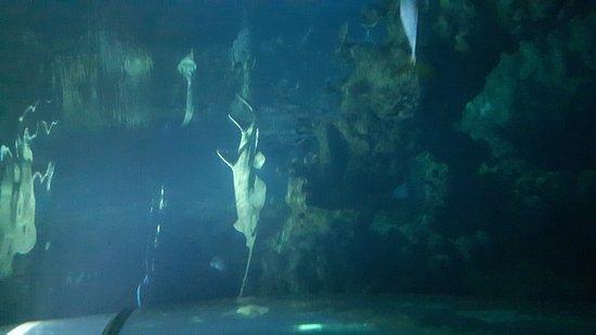 The Deep: 20170102_161510_large.jpg