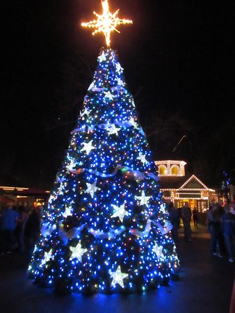 Dollywood Christmas.Christmas Tree At Dollywood Picture Of Dollywood Pigeon