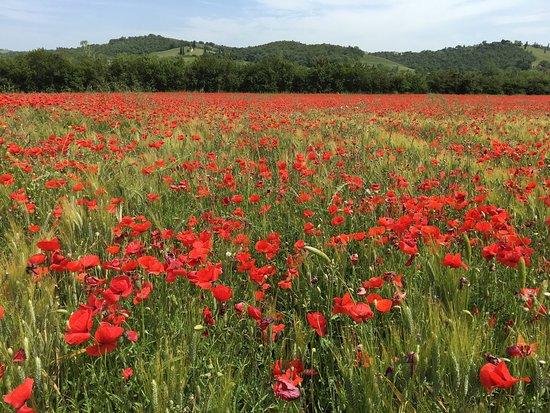 Asciano, Italia: Tours By Roberto