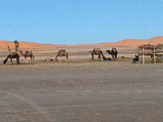 Auberge Camping Ocean Des Dunes : photo5.jpg