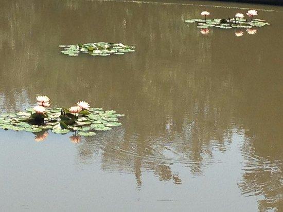 Sarah P. Duke Gardens: Like Monet's garden . . .