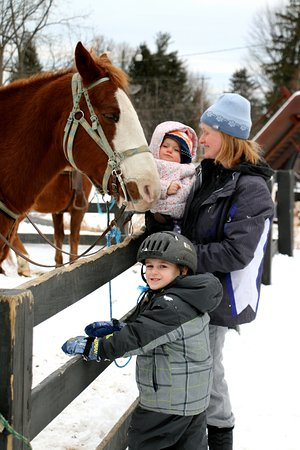 Kerhonkson, NY: Visiting the friendly horses