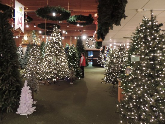 An array of Christmas trees - Picture of Bronner's Christmas ...