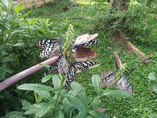 Butterfly Garden In Silent Valley Picture Of Silent Valley National Park Kerala Tripadvisor