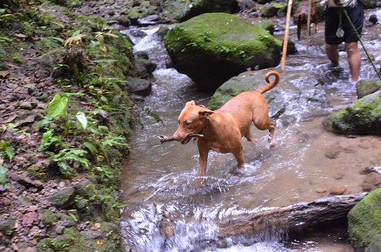 Princesa de la Luna Eco Lodge: Hiking companion
