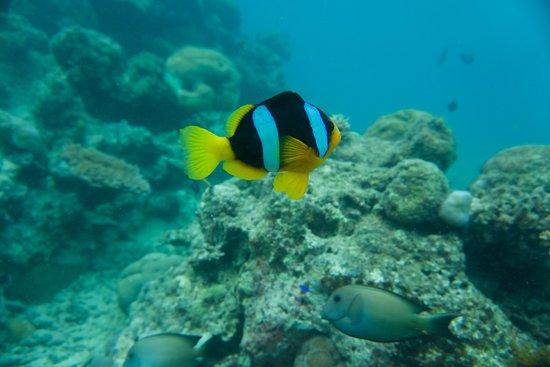 Hideaway Island Resort-billede