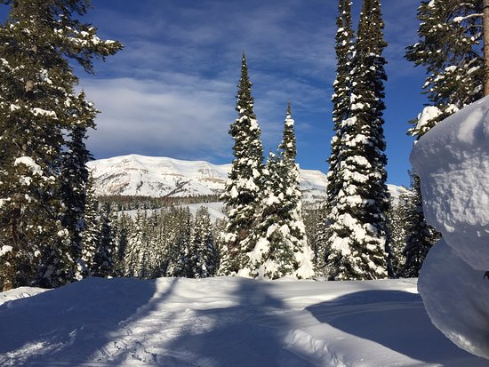 Pinedale, WY: Pines with Snow