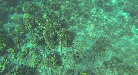 Kealakekua, ฮาวาย: Captain Cook Snorkel Location