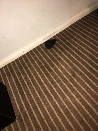 Shirrell Heath, UK: The condition and cleanliness of the room is unacceptable...