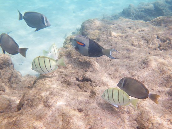 Waialea Beach: 魚たち