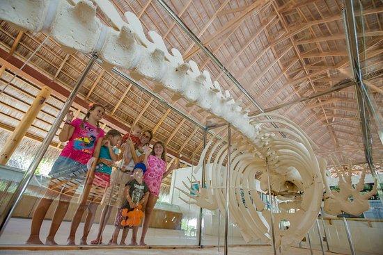 Kuramathi: Eco Centre with resident marine biologist