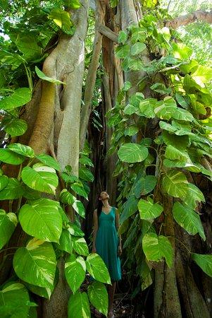 Kuramathi: Banyan Tree Trail