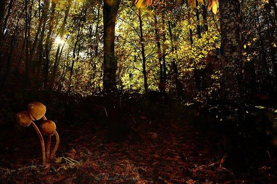 Malpartida de Plasencia, Spanien: Luces de otoño en el Valle del Ambroz, con Monfragüe Vivo