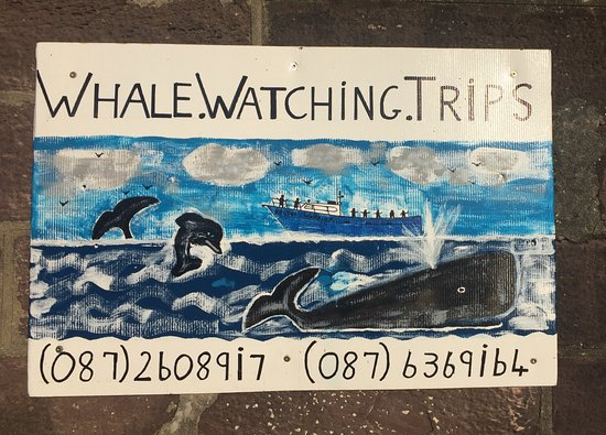 Hrabstwo Waterford, Irlandia: Our skipper's own work of art advertising whale watching boat trips off Dunmore East, Co. Waterf