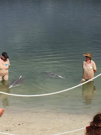 Tin Can Bay, Australië: Dolphins with volunteers
