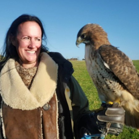 Julianstown, Ireland: This gorgeous falcon (and the way he might look at you :) )