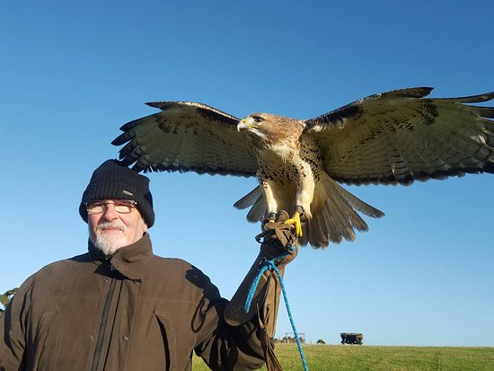 Julianstown, Ireland: Dad and Falcon x