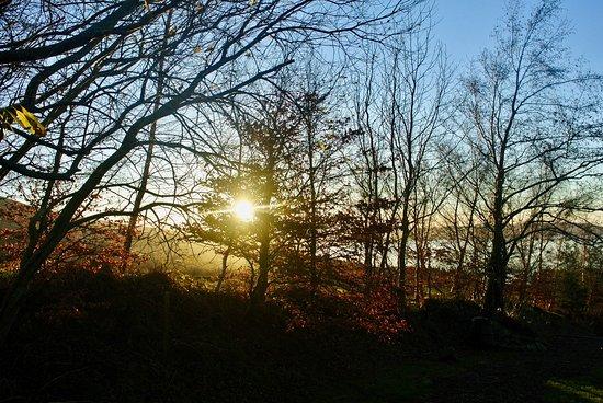 Blessington, Ireland: Sunset through the trees