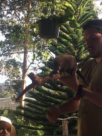 Toucan Rescue Ranch : Babies!!