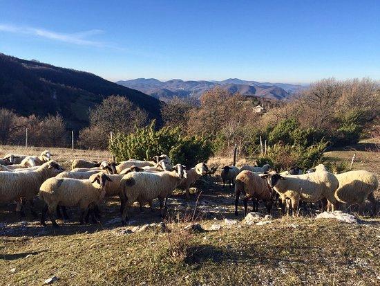 Agriturismo Bartoli: photo0.jpg