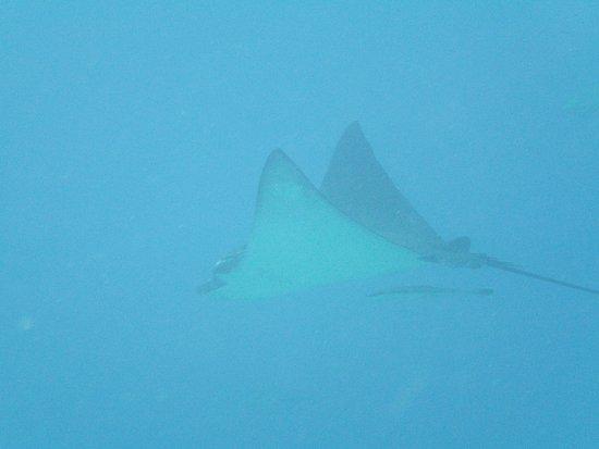 Elphinstone Reef : PICT0066_large.jpg