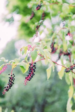 Balchik, Bulgaria: Ботанический сад Балчика