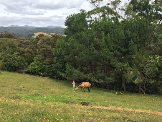 Coromandel Peninsula, Neuseeland: The Cottage Backyard