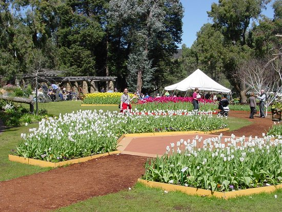 Spring Flowers Are Out Review Of Araluen Botanic Park Western