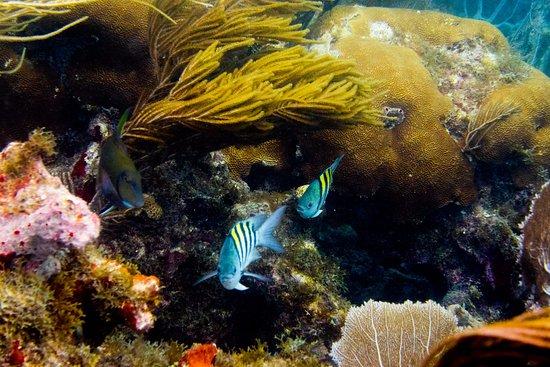 West End Village, Anguilla: Reef off Sandy Island