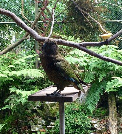 Otorohanga Kiwi House & Native Bird Park: Very peaceful and safe environment for the birds