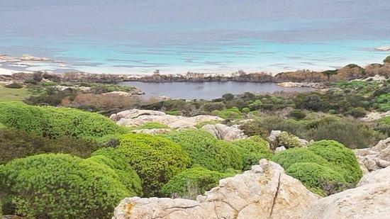 Asinara, Italy: cala Sant'Andrea zona vietata