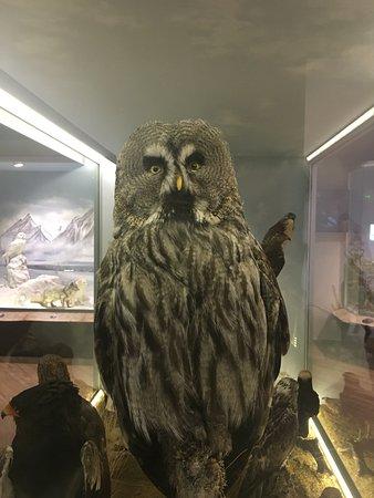 Μουσείο Φυσικής Ιστορίας και Μουσείο Μανιταριών Φωτογραφία