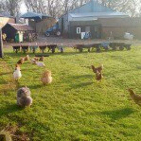 Hunmanby, UK: The chicken shed pod graffitoe farm...