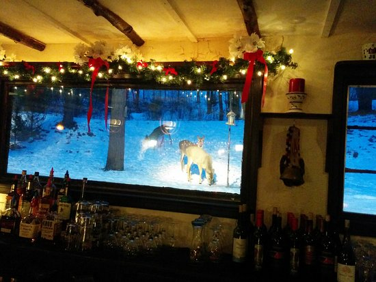 Hubertus, WI: White tailed deer outside the bar area