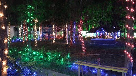 Coorg Nest Homestay: Christmas light decor